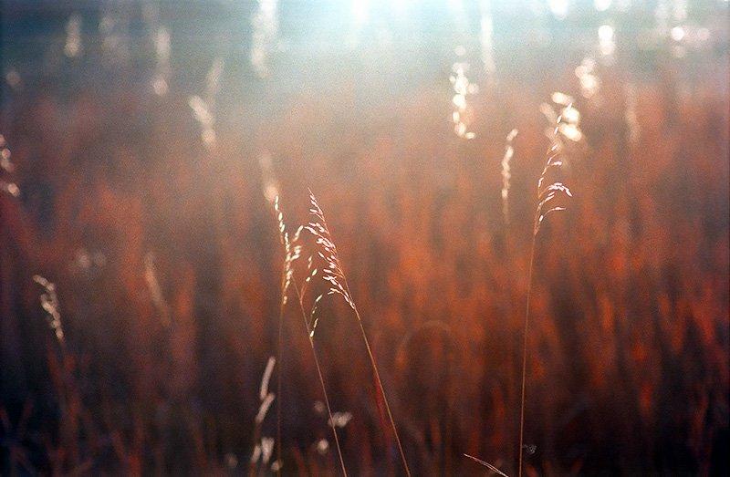 Autumn grasses, Crane Hollow Road, Boulder County, Colorado