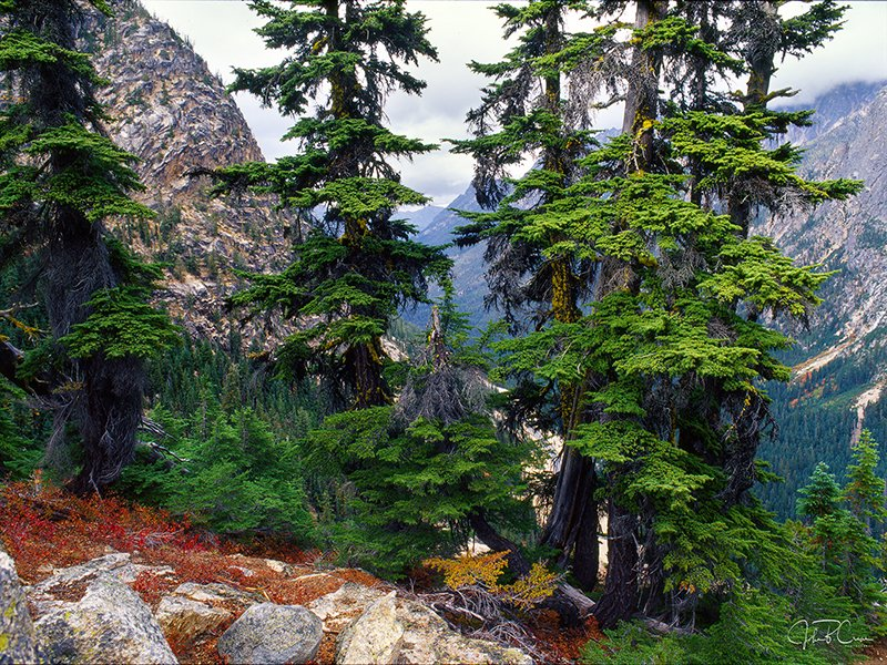 Washington Pass, Okanogan National Forest, WA
