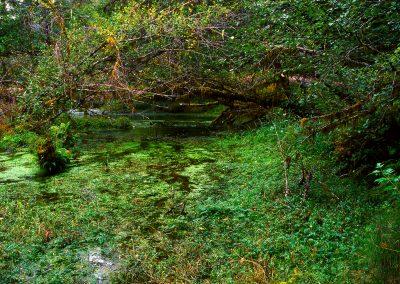 Taft Creek, Hoh Rainforest, Olympic National Park, Washington