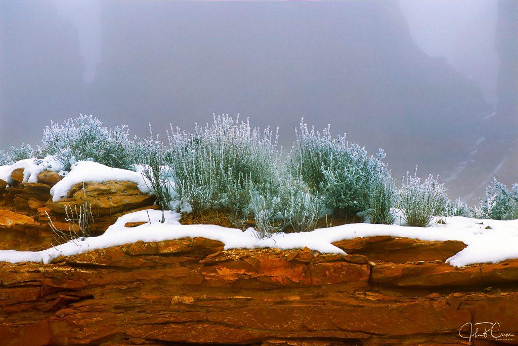 Mormon Tea, Arches National Park, Utah