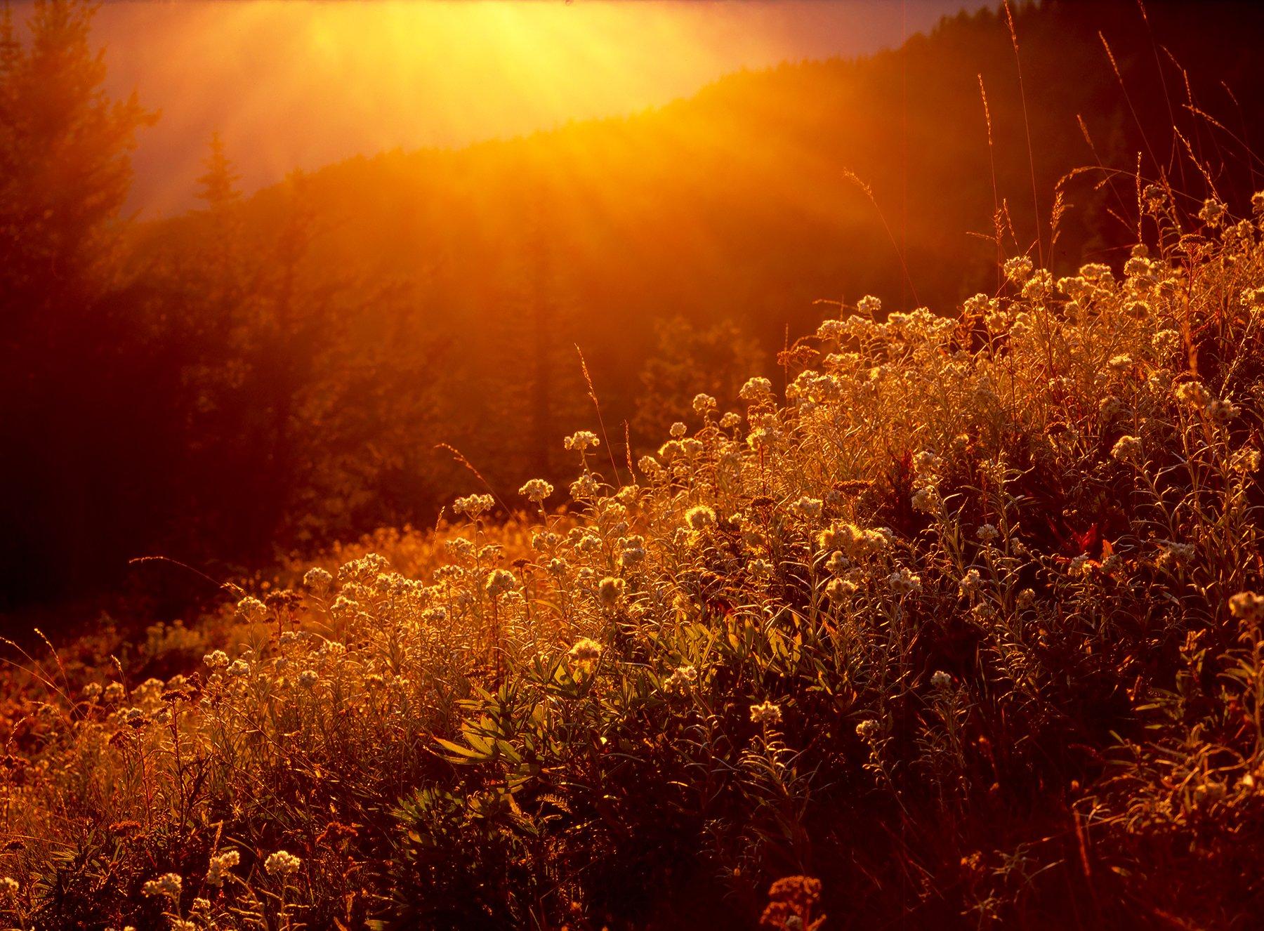 Golden Hour on Hurricane Ridge, Olympic National Park, Washington (2017)