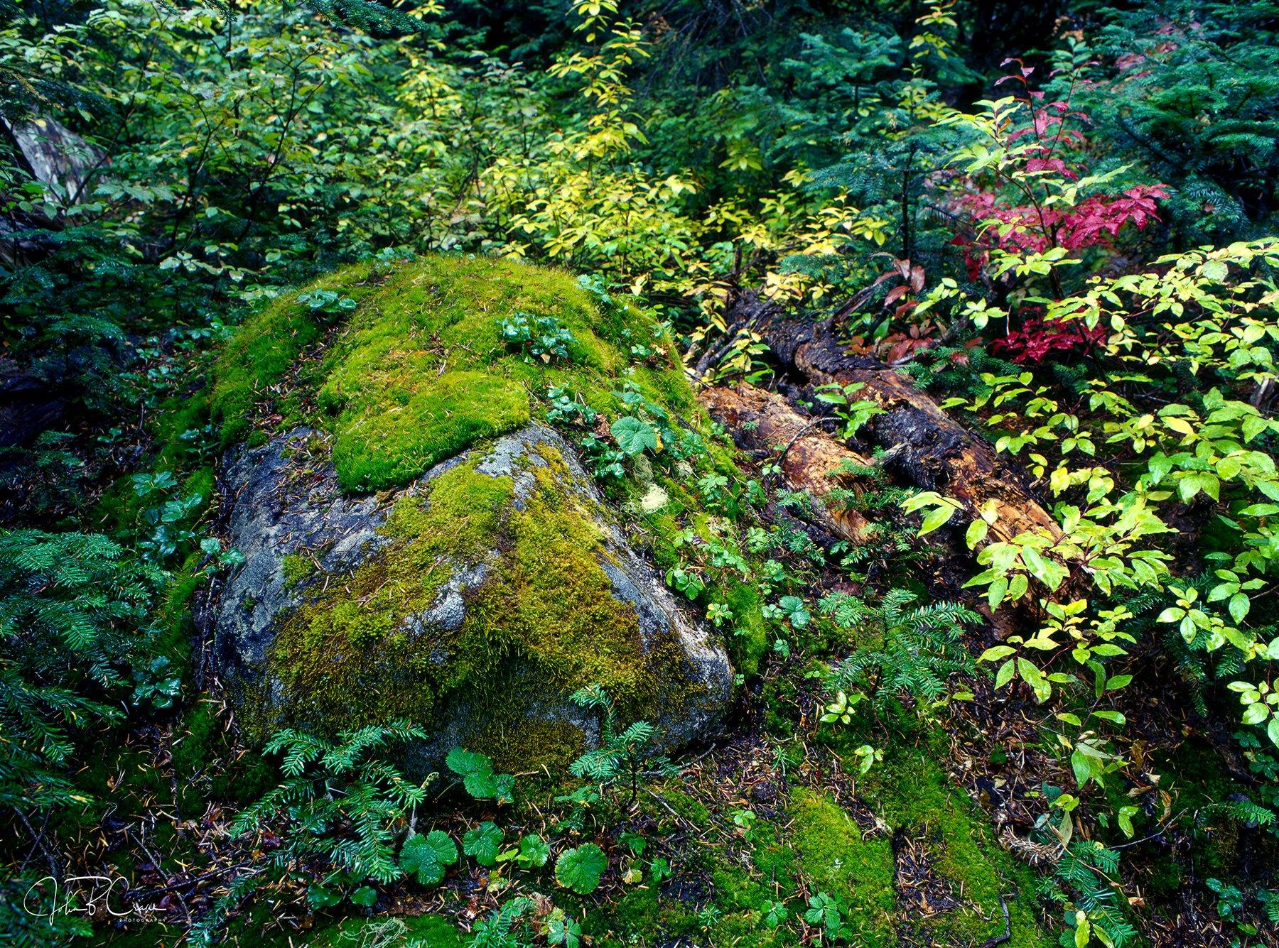 Rainy Lake Trail, North Cascades National Park, Washington