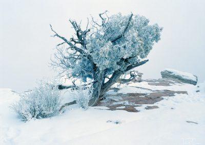 frame 10 - Dead Horse Point State Park, Utah (2020)