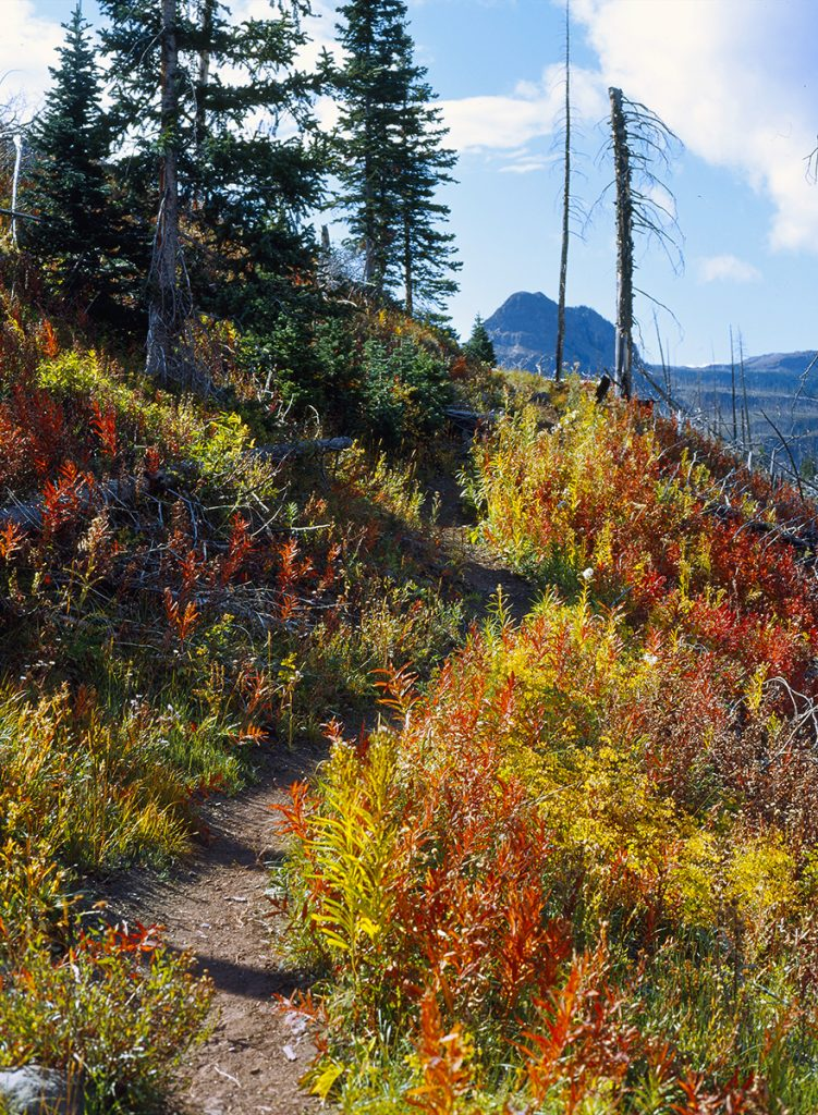 Fall foliage, Flat Tops Wilderness, White River National Forest, Colorado.